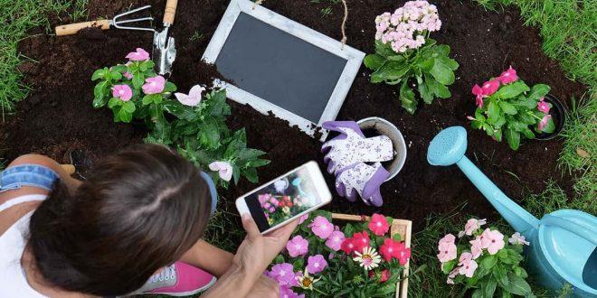 تطبيقات للمحافظة على النباتات المنزلية