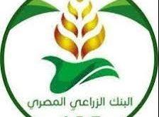 الشروط اللازمة للتقدم لوظائف البنك الزراعي المصري